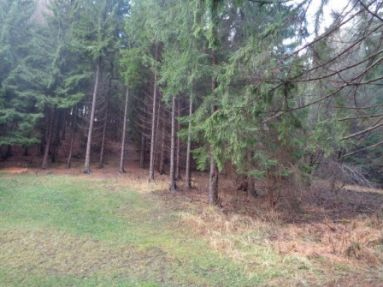 Predaj lesného pozemku - zvýhodnená cena!